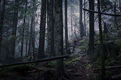 MOODY DAY IN THE FOREST ON NORTH SHORE, CANADA.