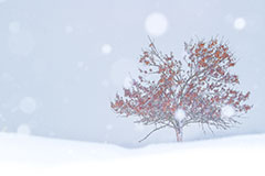 WINTER AND A TREE
