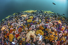 SEASCAPE OF BIODIVERSITY